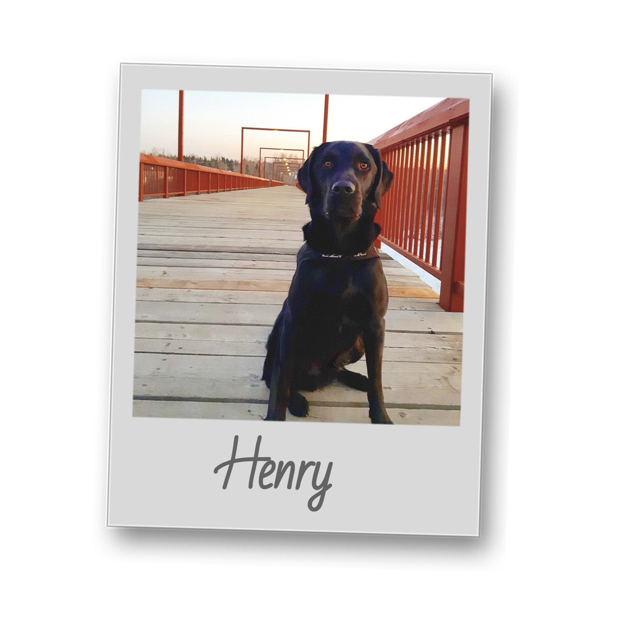Henry   polaroid pets   resize to 500x500